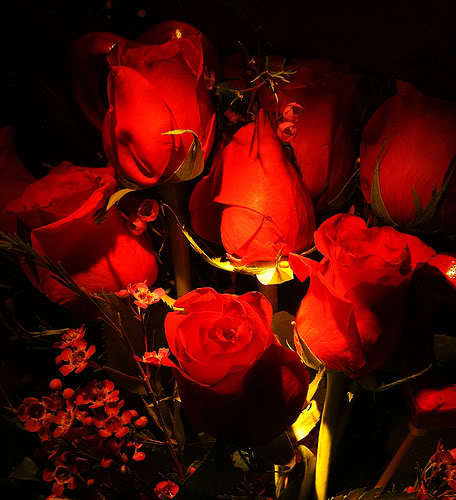 Lule dhe vetëm lule! EIe9AH4e5gt8u06FiIGvxQE_FoO-9A0iANb_t1P7W3bTTJGhGbE6jw==