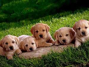 Cute Puppies Tagged